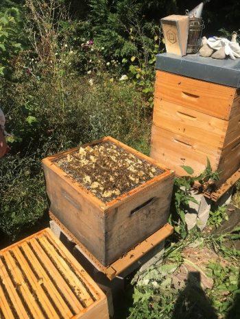 eriane-abeille-2