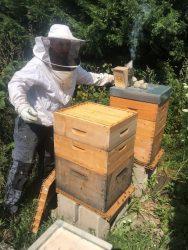 eriane-abeille-3